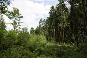 FNP 2015 – Waldumwandlung verantwortungsvoll?