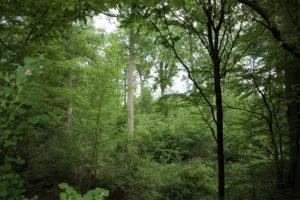 FNP 2015 – Waldumwandlungsverfahren