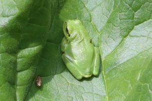 Amphibien und Reptilien im Land gefährdet