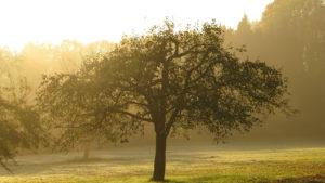 Faktencheck: Umweltbericht